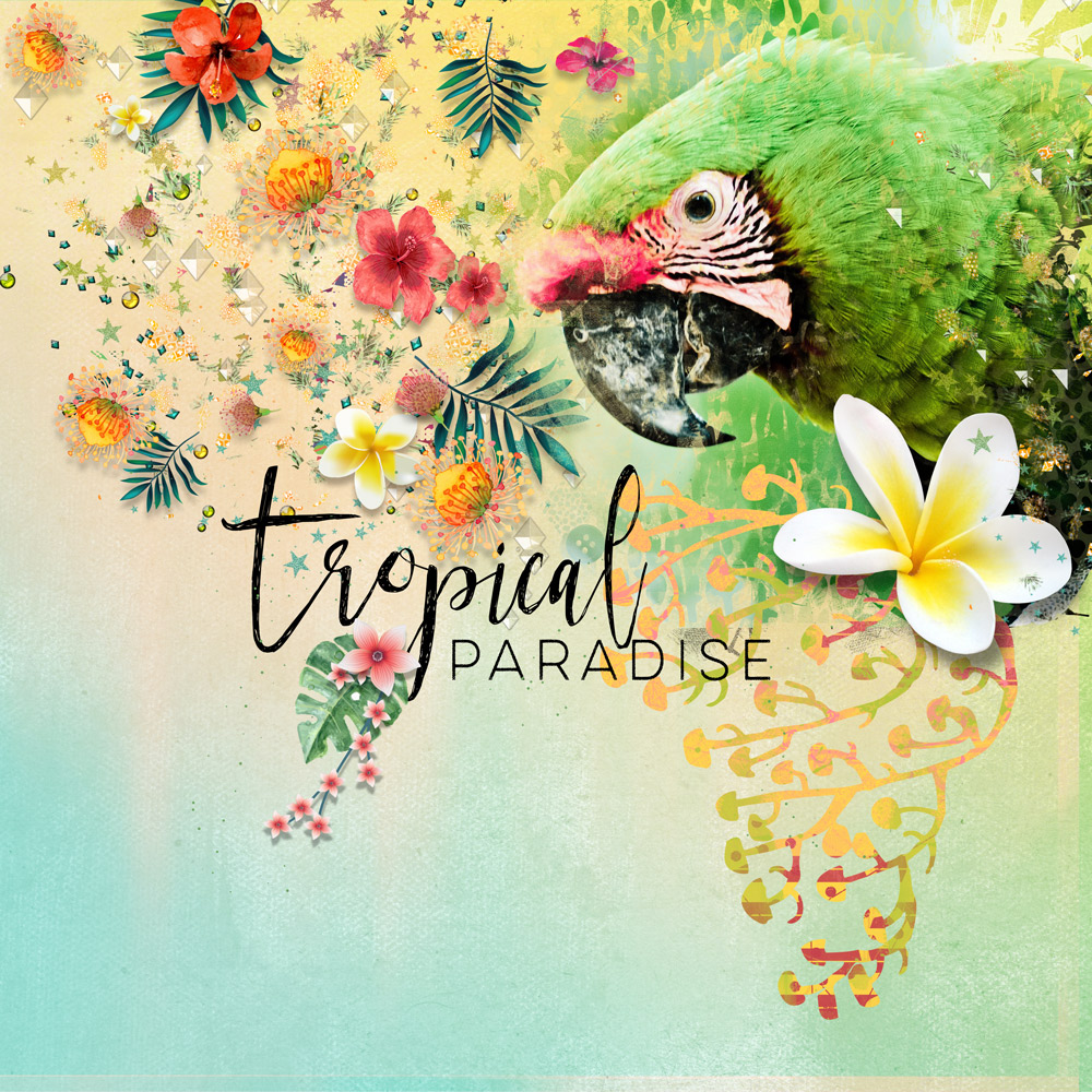 Tropical Fusion by Oldenmeade